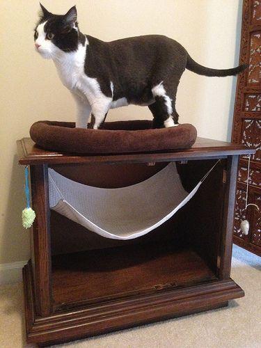 Diy Cat Bed Toy Diy Pets Pinterest Diy Cat Bed Cat And Cat