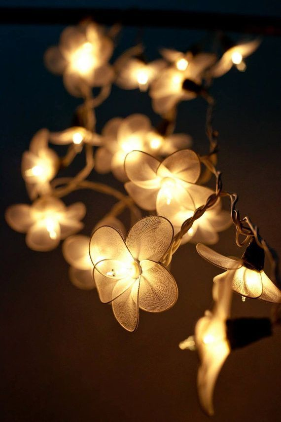 20 white flower string fairy lights fairy lights pinterest 20 white flower string fairy lights mightylinksfo Image collections