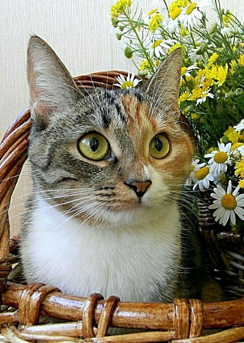 Pin Von Nira Barzilai Auf Schatzeli Schatzeli Katzen