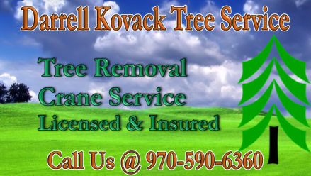 licensed and insured tree removal on 14 Tree Service Ideas Tree Service Tree Tree Removal
