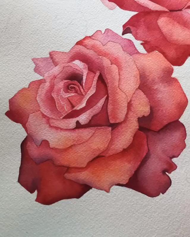 Resim Egitimi Adim Adim Bir Gul Boya Nasil Yapilir Video In 2020 Flower Art Painting Watercolour Tutorials Watercolor Rose