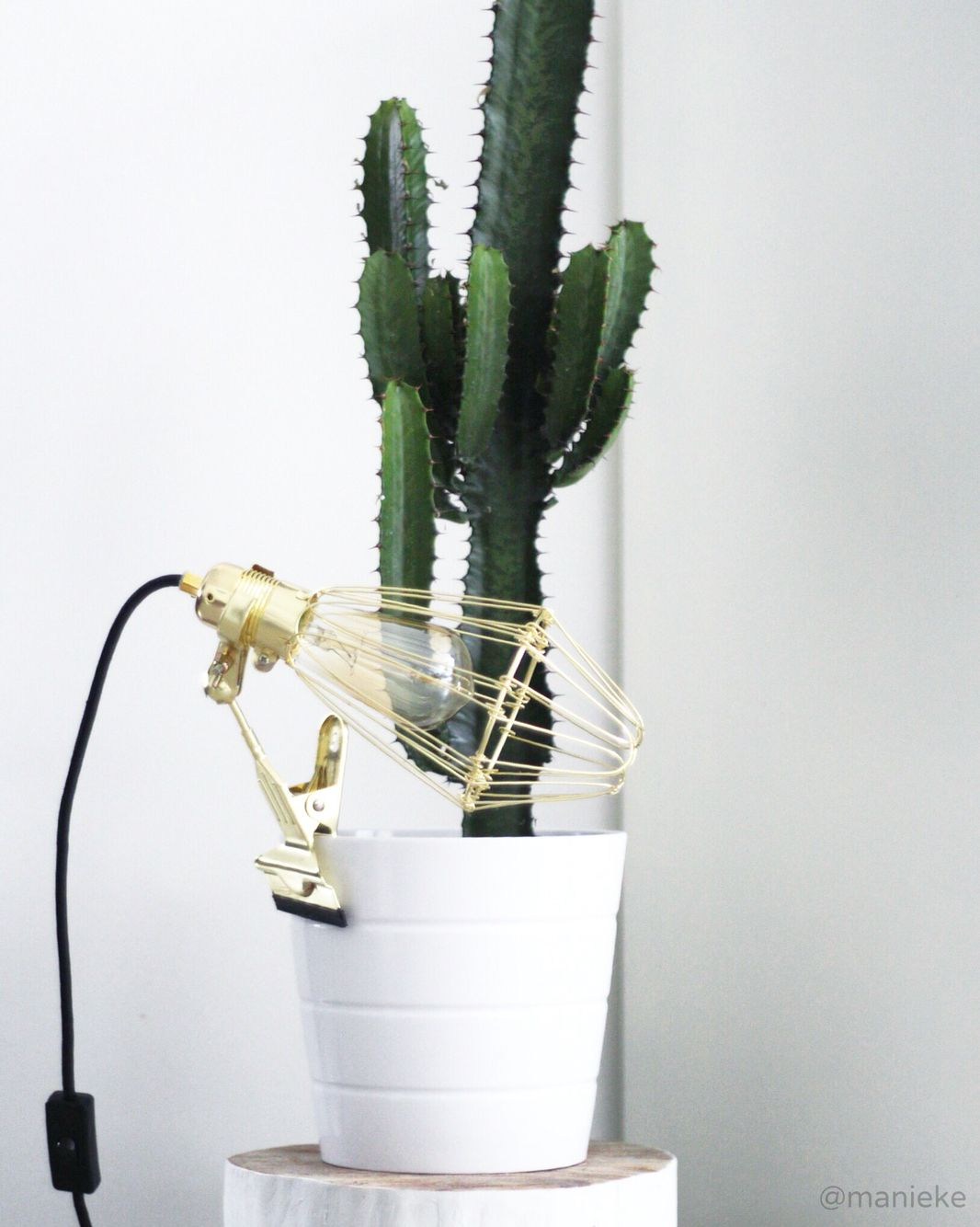 my home interior cactus ikea light lijn m manieke flowers plants pinterest. Black Bedroom Furniture Sets. Home Design Ideas