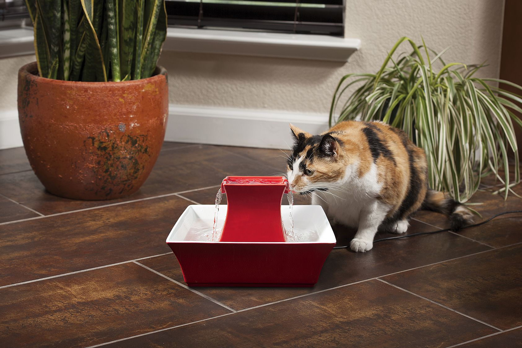 Petsafe Water Fountain Give Your Cat Fresh And Filtered