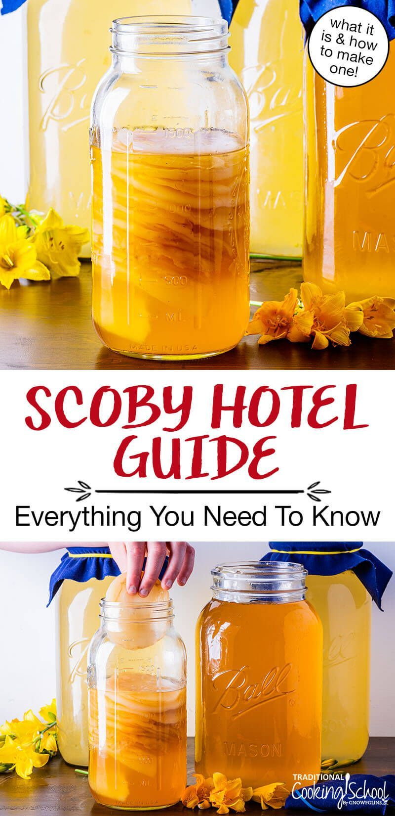 Hosted Site Search Discovery For Companies Of All Sizes In 2020 Scoby Hotel Scoby Diy Food Recipes