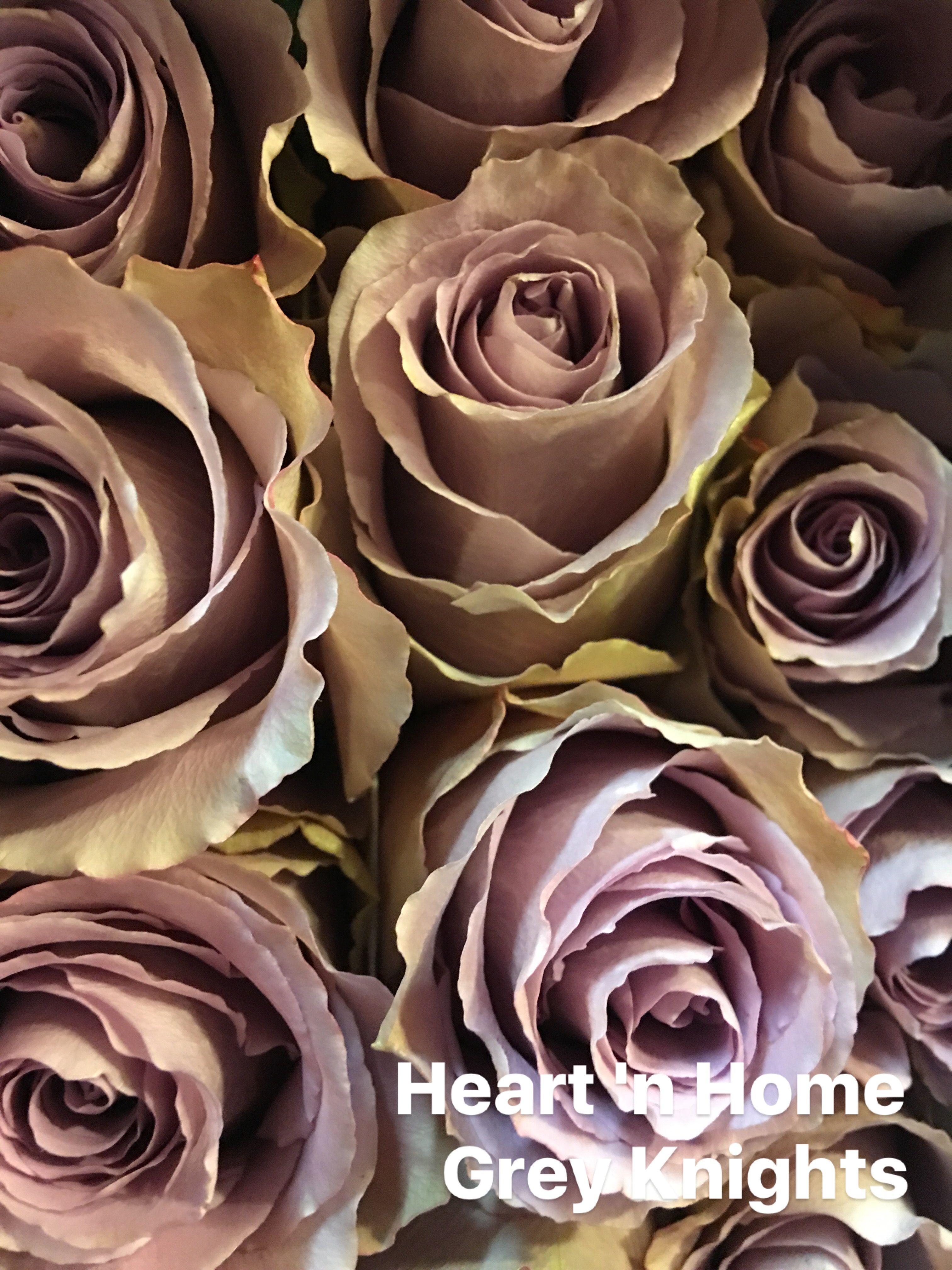 Home bulk roses peach roses - Grey Knights Roses 50 Cm