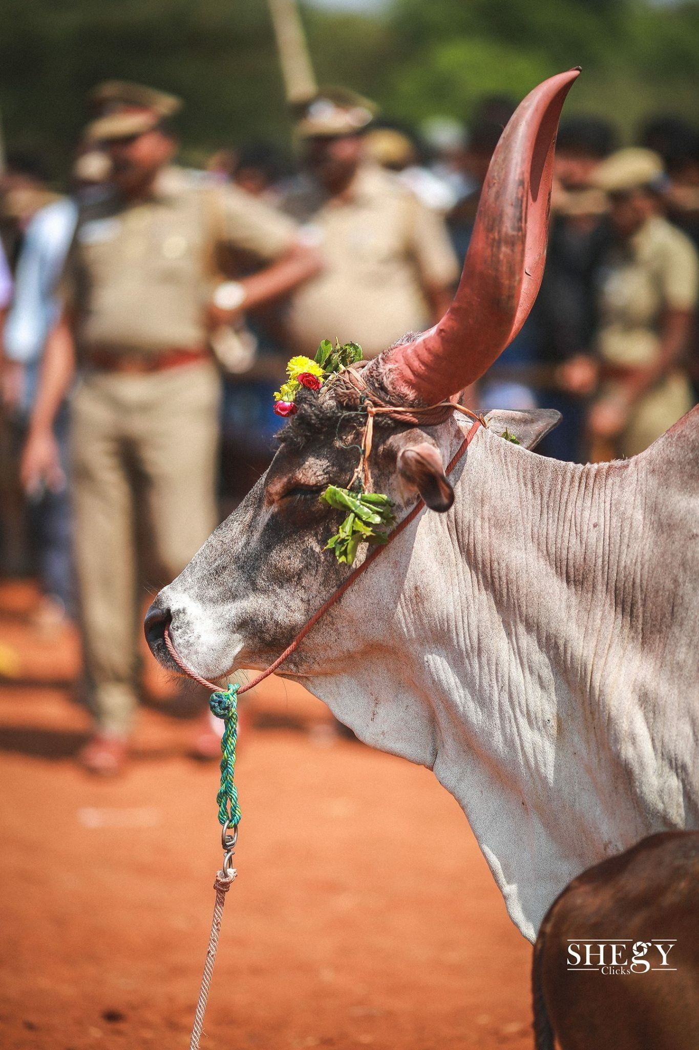 Jallikattu Village Photography Photoshop Backgrounds Background For Photography John constable was born in east bergholt, a village on the river stour in suffolk, to golding and ann (watts) constable. jallikattu village photography