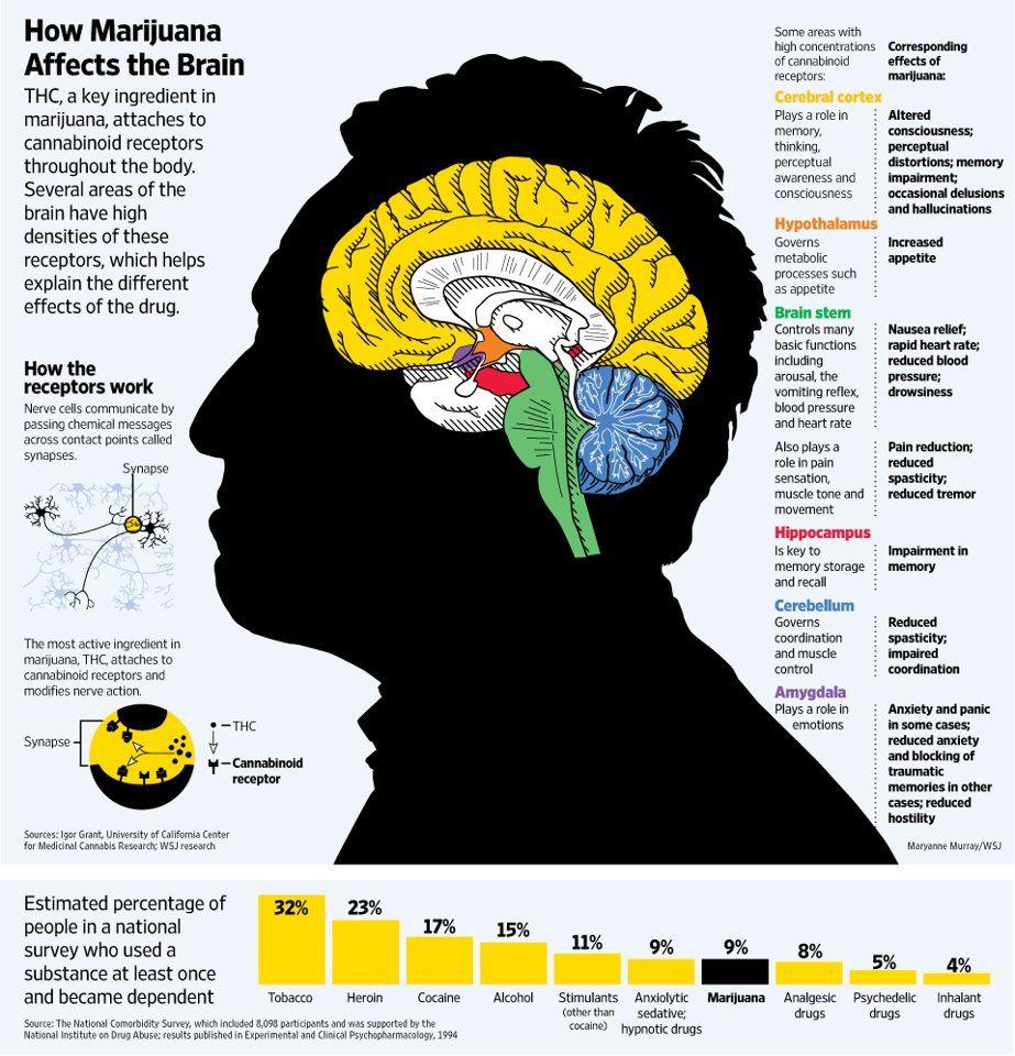 recipe: brain of revolution [34]