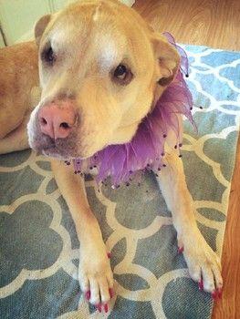 Cher Is Back On The Charts With Woman S World Senior Dog Dog Adoption Adoption