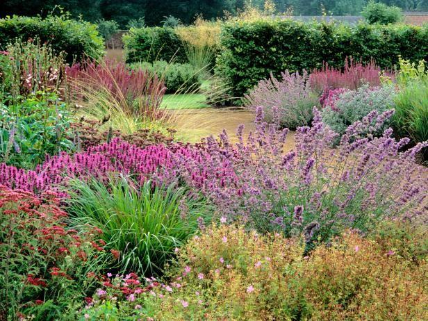 Perennial plants gardens fleur jardin jardins jardin - Hgtv home design software user manual ...