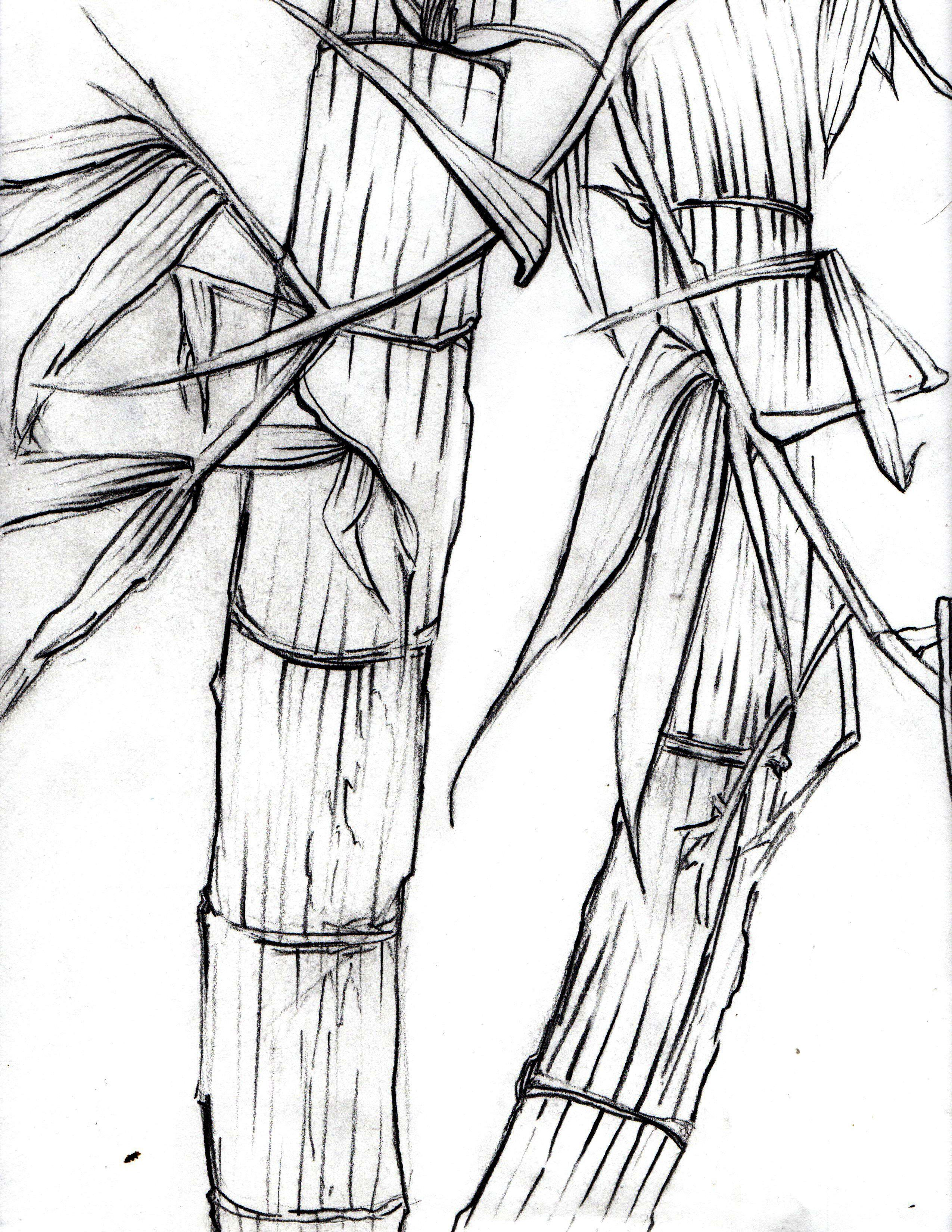 Bamboo Contour Line Drawing