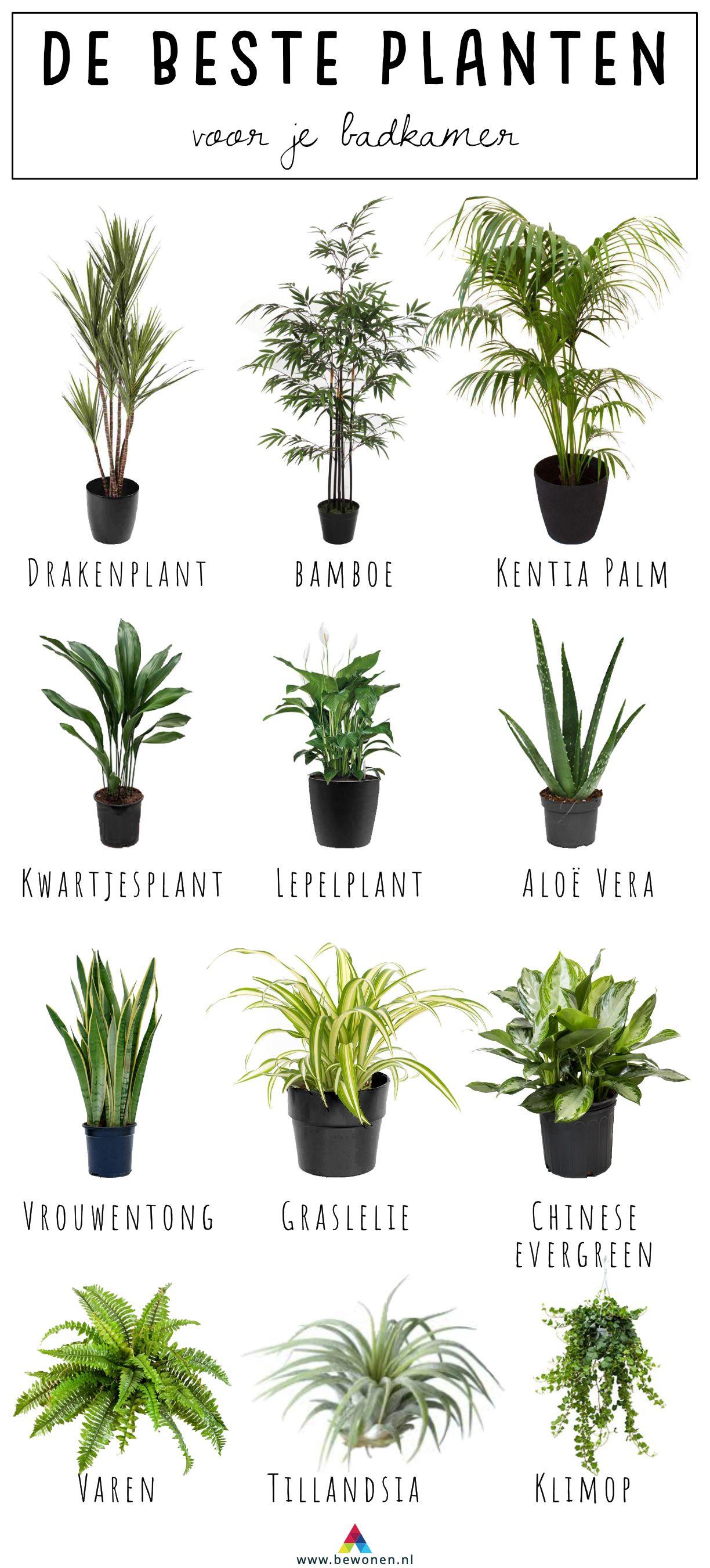 Welke Plant Is Dit.12x De Beste Planten Voor Je Badkamer Badkamer Planten
