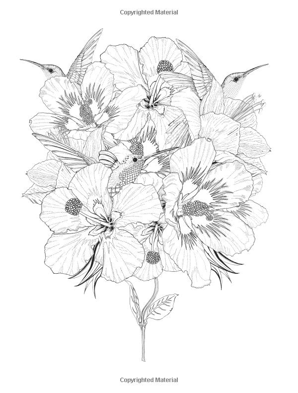 Amazon.com: Birdtopia: Libro de colorante (9781780677552): Daisy ...