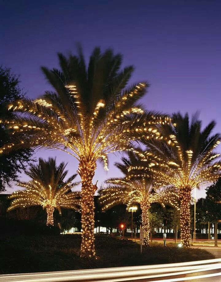 Decorating With Christmas Lights, Palm Tree