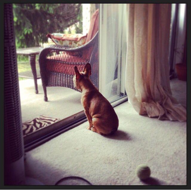 Little watcher