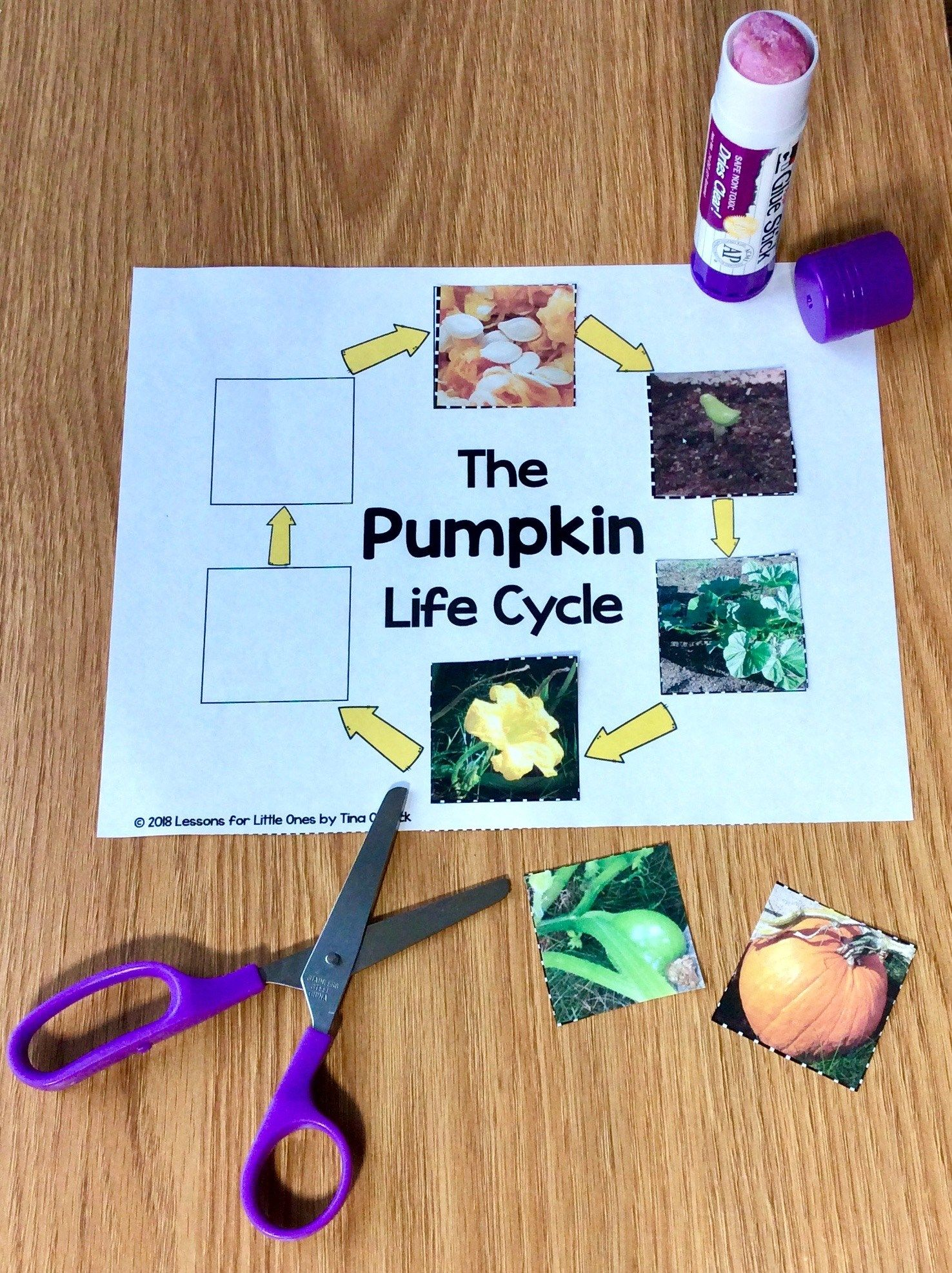 How To Make The Pumpkin Life Cycle Meaningful Amp Fun For