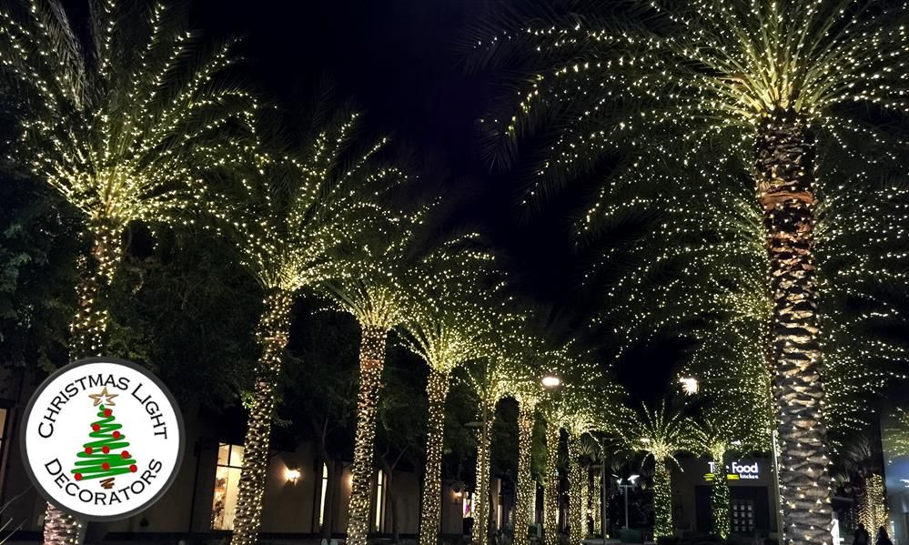 Christmas Lights In Palm Trees.Pin On Christmas Decorations