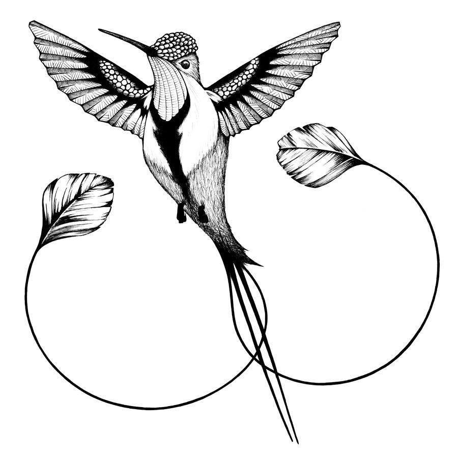Recent Works On Behance Hummingbird Drawing Bird Drawings Bird Illustration
