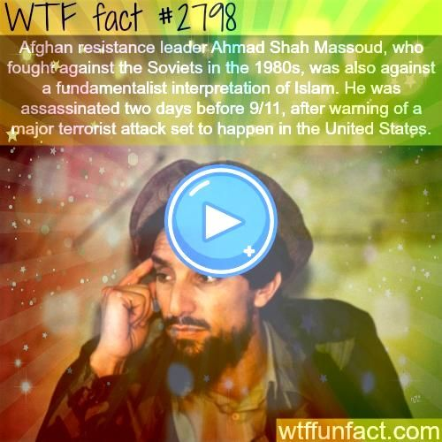 Fun Facts Did you know thatDid you know thatWTF Fun Facts Did you know thatDid you know that Follow us for more amazing facts Amazing WTF Facts  Did You Know Facts  Rando...