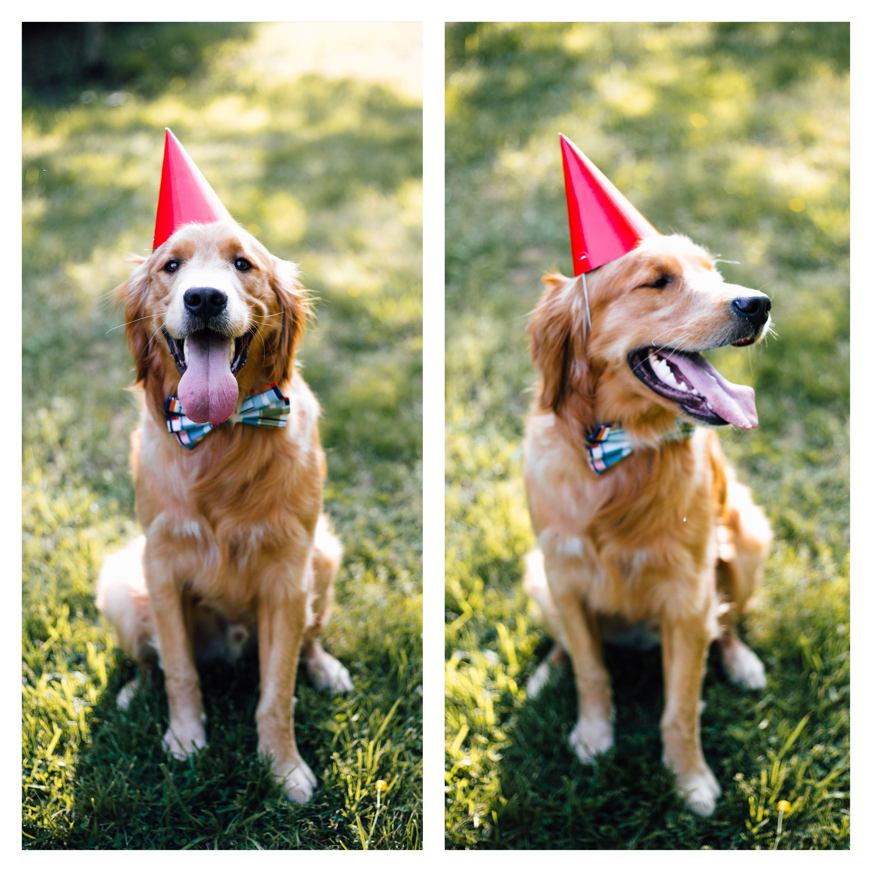 Birthday Party For An Adorable Golden Retriever 10 10 Worth