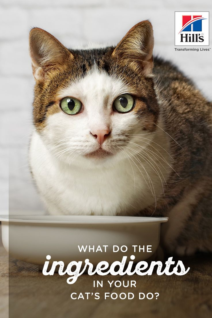 Cat food learn the benefits of the right ingredients