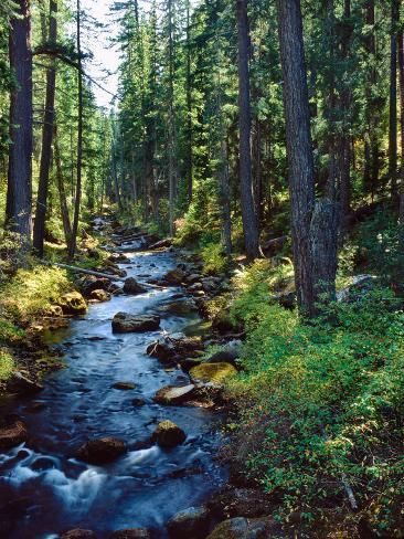 Photographic Print: River flowing through a forest, South Fork, Upper Rogue River, Rogue River : 32x24in