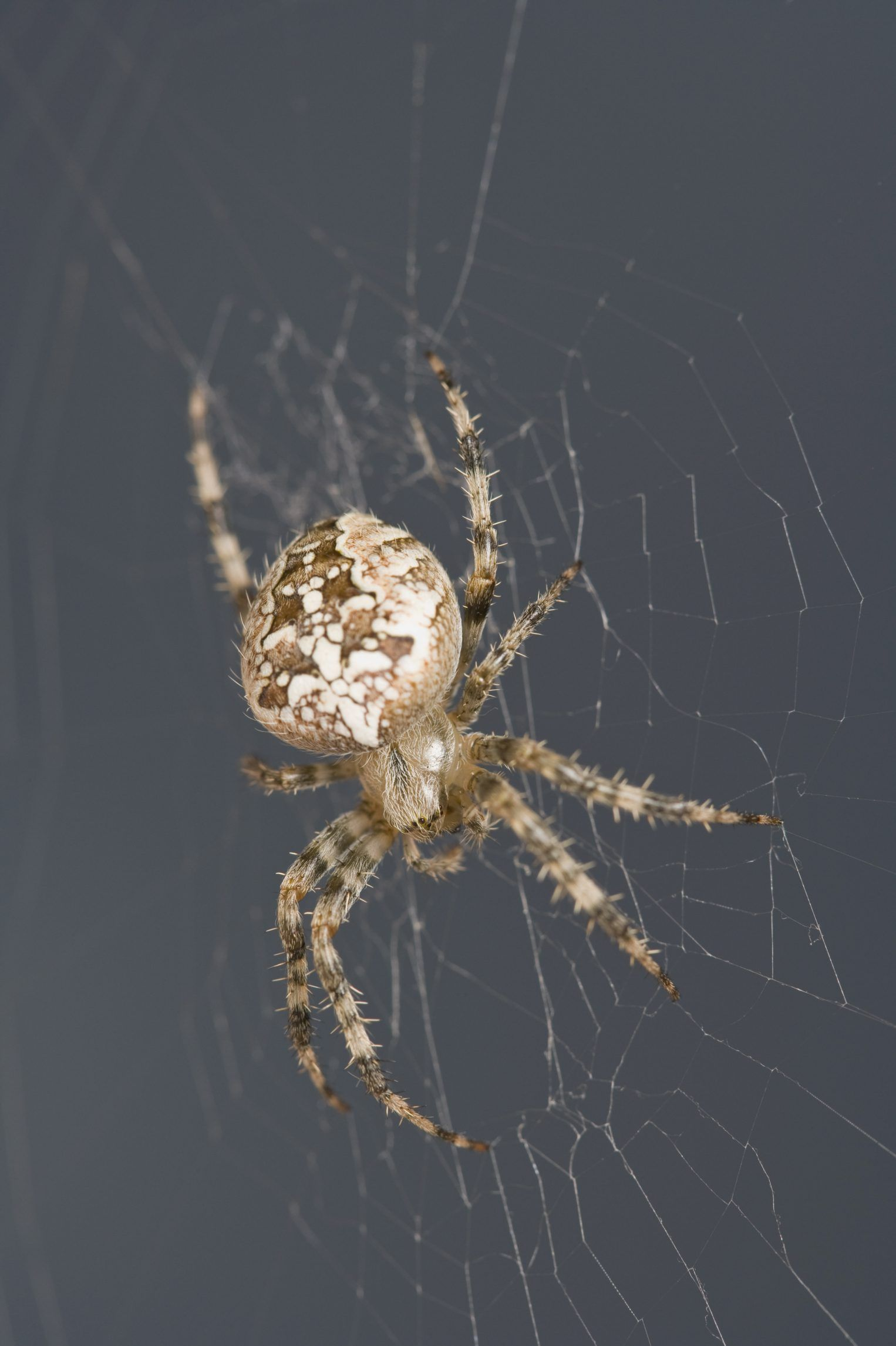 b29d51e57c68ccf18bf35db5b1dee308 - How To Get Rid Of Spiders From Your Car