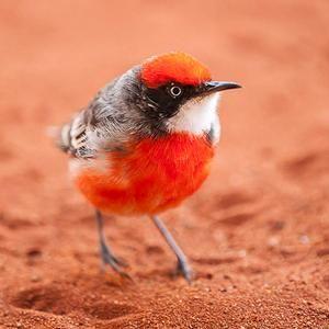 Birds おしゃれまとめの人気アイデア Pinterest Asako 鳥 バード 空