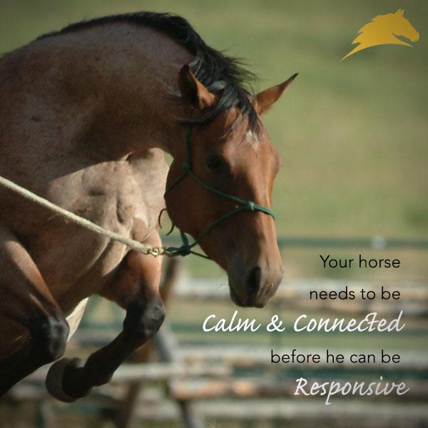 4 Calm Connected Responsive Parelli Savvy Club Horses