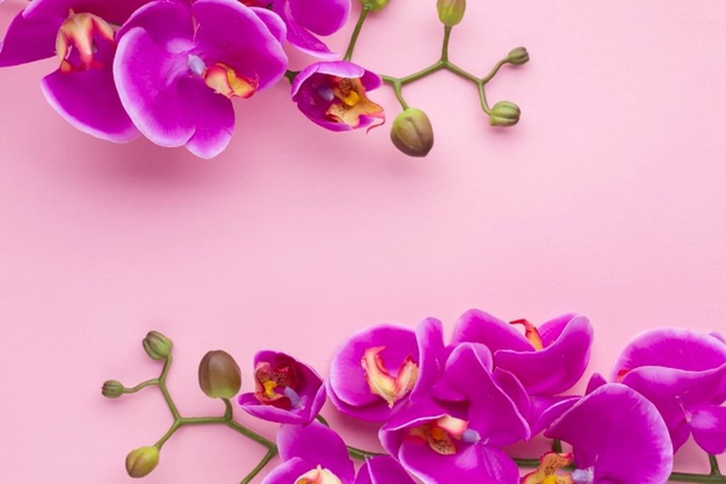 Pink Copy Space Background With Orchid Flowers Paid Ad Affiliate Space Flowers Orchid Copy In 2020 Orchid Flower Orchids Space Backgrounds