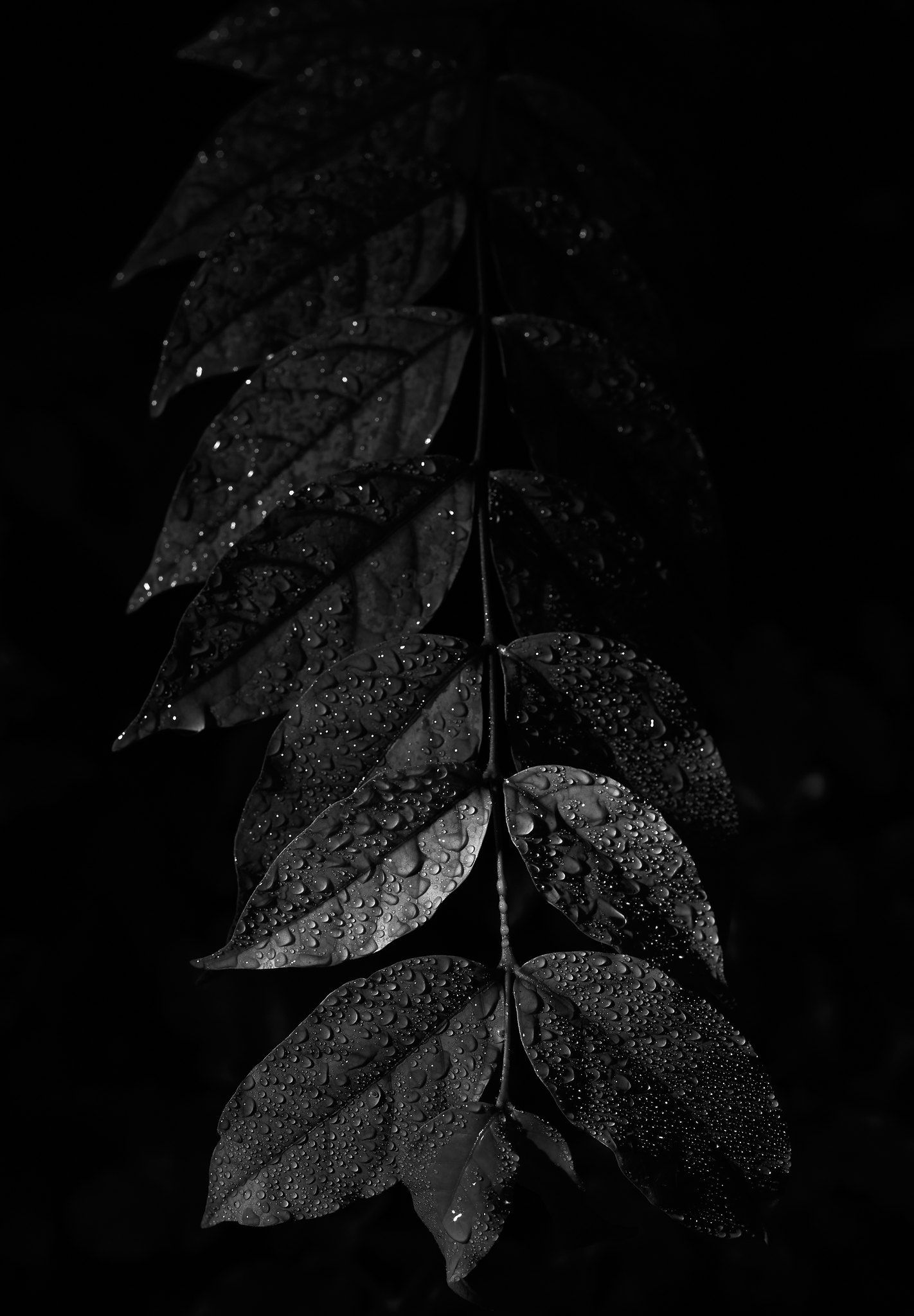 Leaf Black And White Leaves Black Aethstetic Background Black Aesthetic Wallpaper Aesthetic dark leaf wallpaper