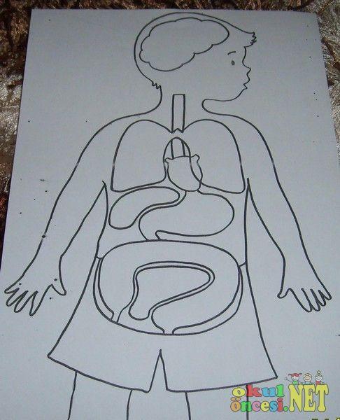 Okul öncesi Vücudumuz Googleda Ara Vücudumuz Body Craft