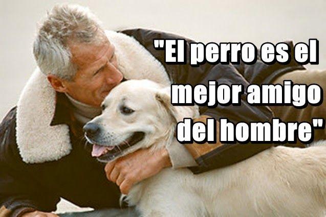 Historia De La Frase El Perro Es El Mejor Amigo Del Hombre Mejor Amigo Del Hombre Perros Mejores Amigos