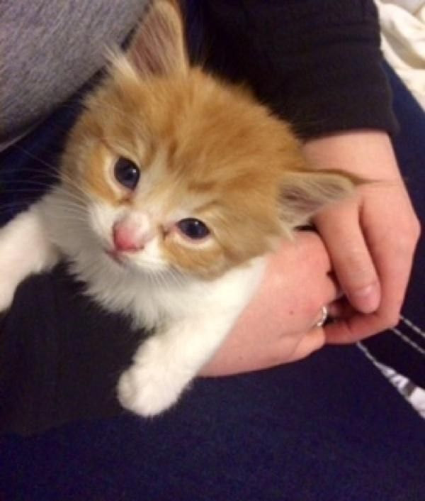 Natural Tick Repellent Recipes Tick Bite Prevention Tips Flea Powder For Dogs Flea Powder Flea Remedies