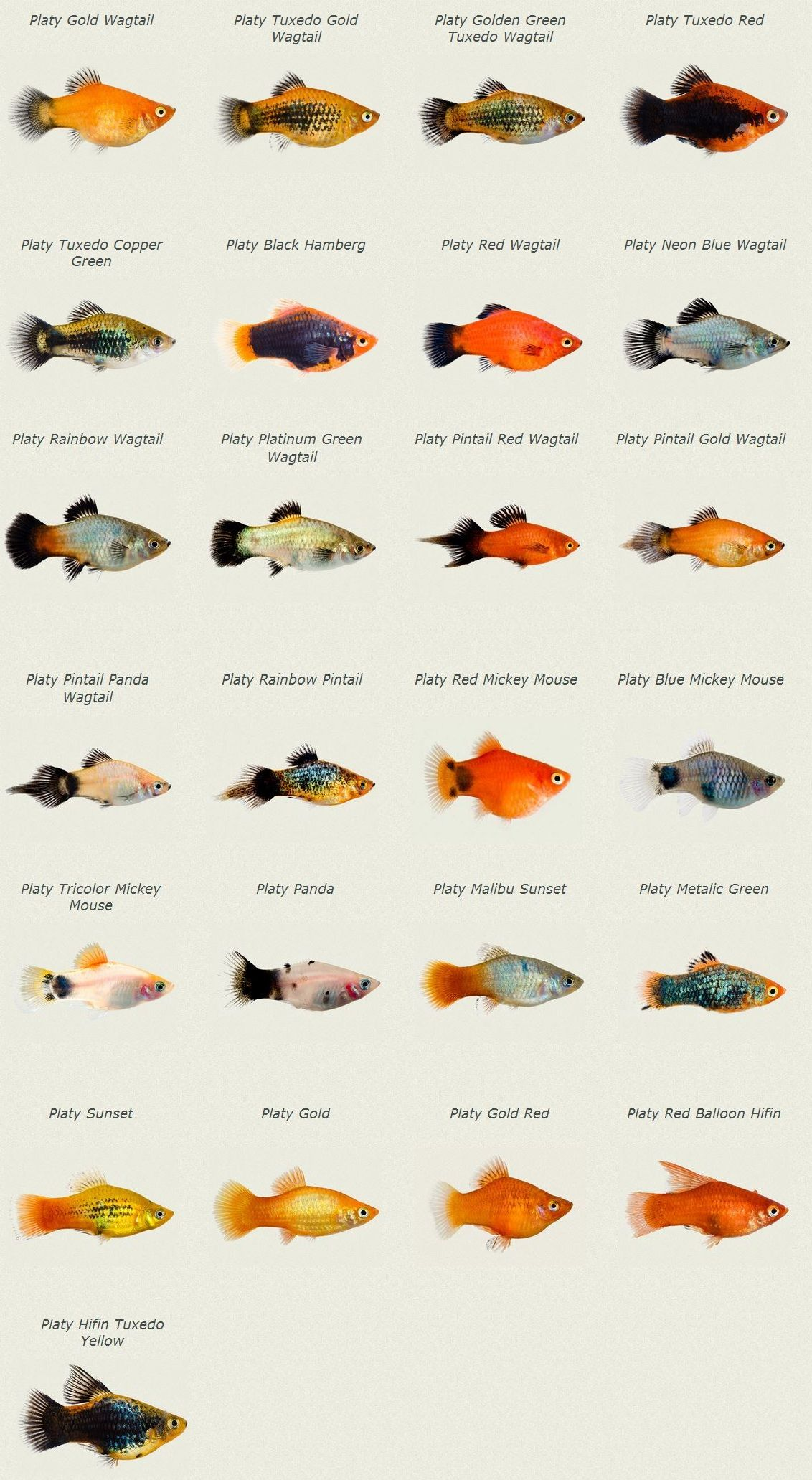 Tropical Fish Species List And Pictures
