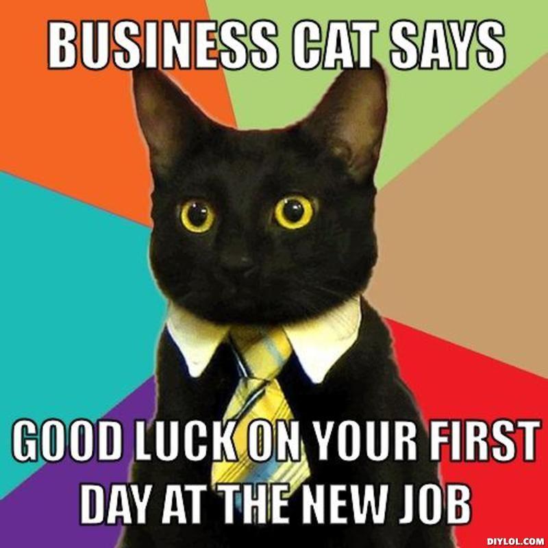 resized_8XTGX.jpg (800×800) Business cat meme, Funny cat