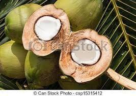 kokosnuss - Google-Suche