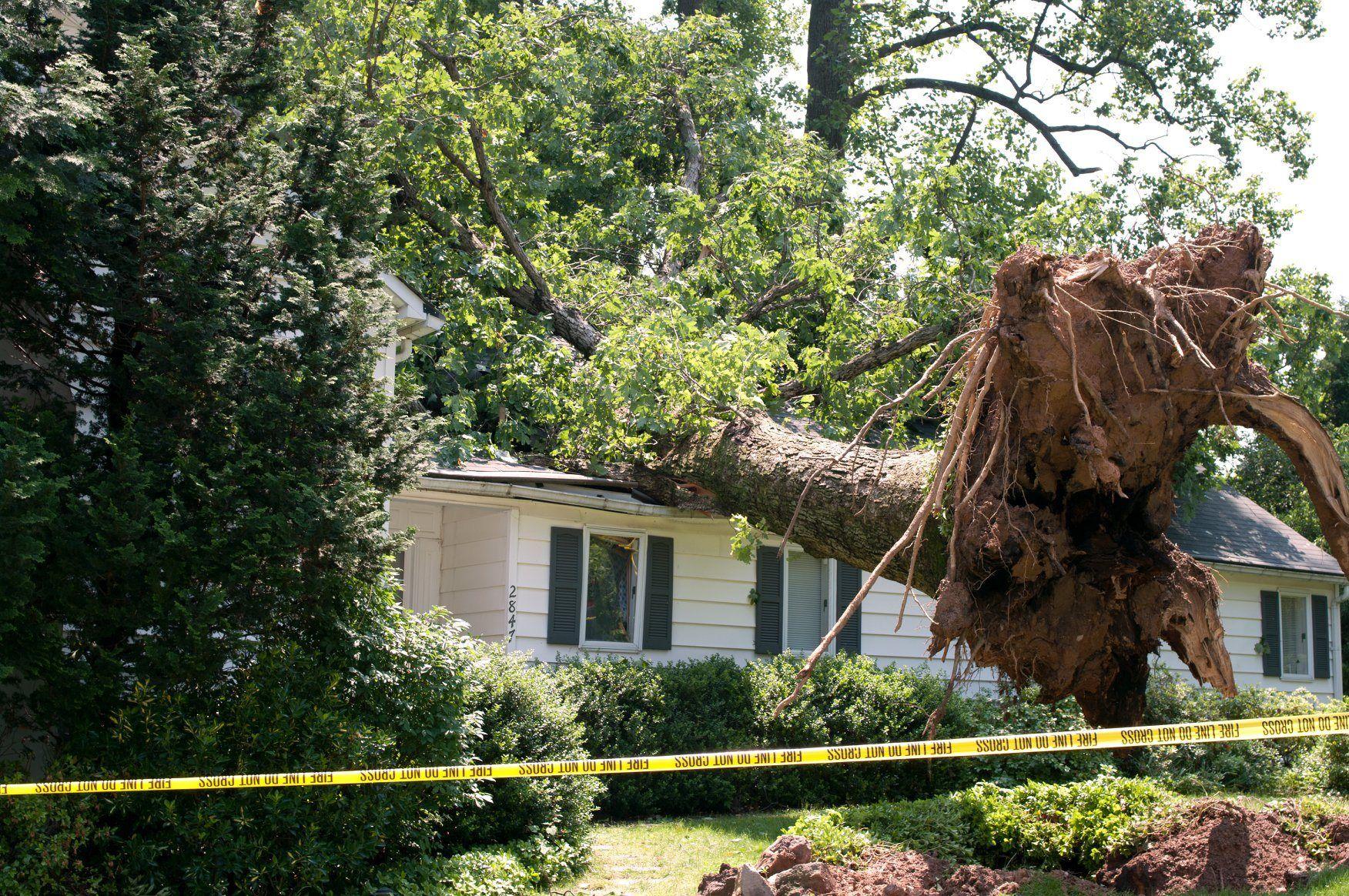 Excavation tree removal tree landscape trees