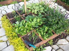 Square foot gardening is most often used for growing veggies, herbs and greens in a small space. It's a simple concept that cuts down on…
