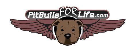 Pitbulls For Life Rescue In Calgary Alberta Amazing People