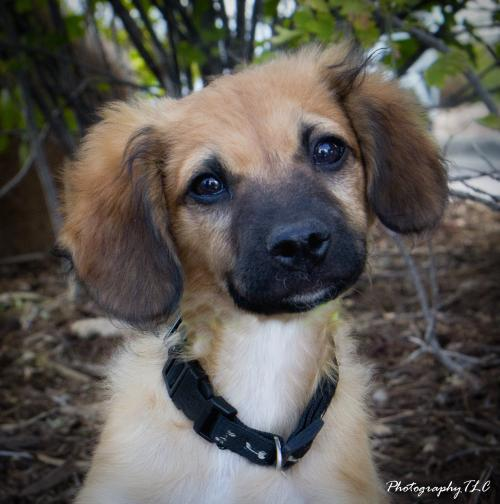 Dog For Adoption Bear An Afghan Hound Mix In Colorado Springs Co Petfinder Help Homeless Pets Dog Adoption Homeless Pets