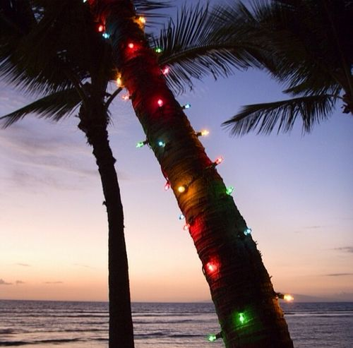 Christmas lights on a Palm tree #christmasinjuly Christmas in July