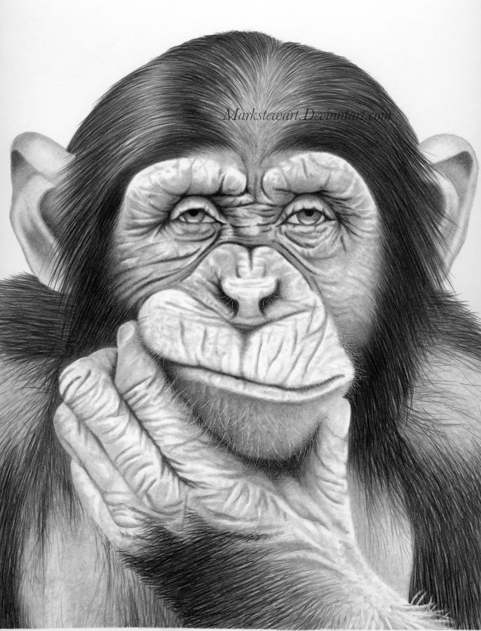 Line Drawing Of Monkey Face : Can i rely on your vote by markstewart deviantart