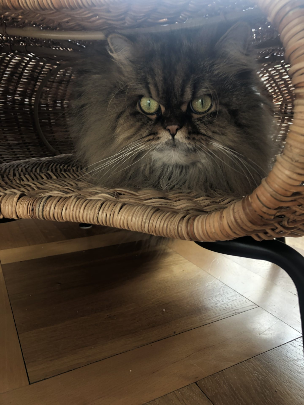 Ikea Cat Bed Hacks Meow Lifestyle In 2020 Ikea Cat Ikea Cat
