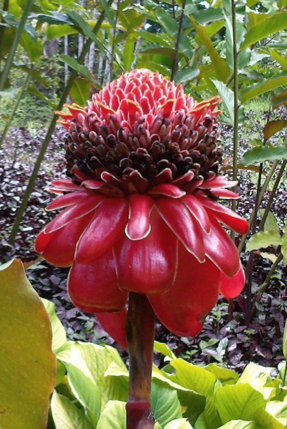 Comment prendre soin de son Corps | Fleurs australiennes, Belles fleurs et Planter des fleurs