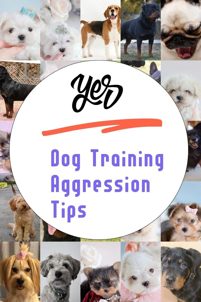 Dog Training Aggression Tips Dog Training Aggression Dog