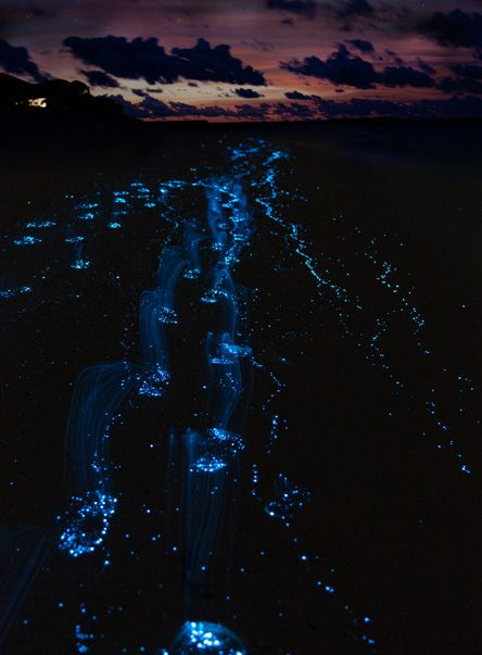 The bacteria in the water of Bioluminescent Bay in Puerto Rico glows when agitated.