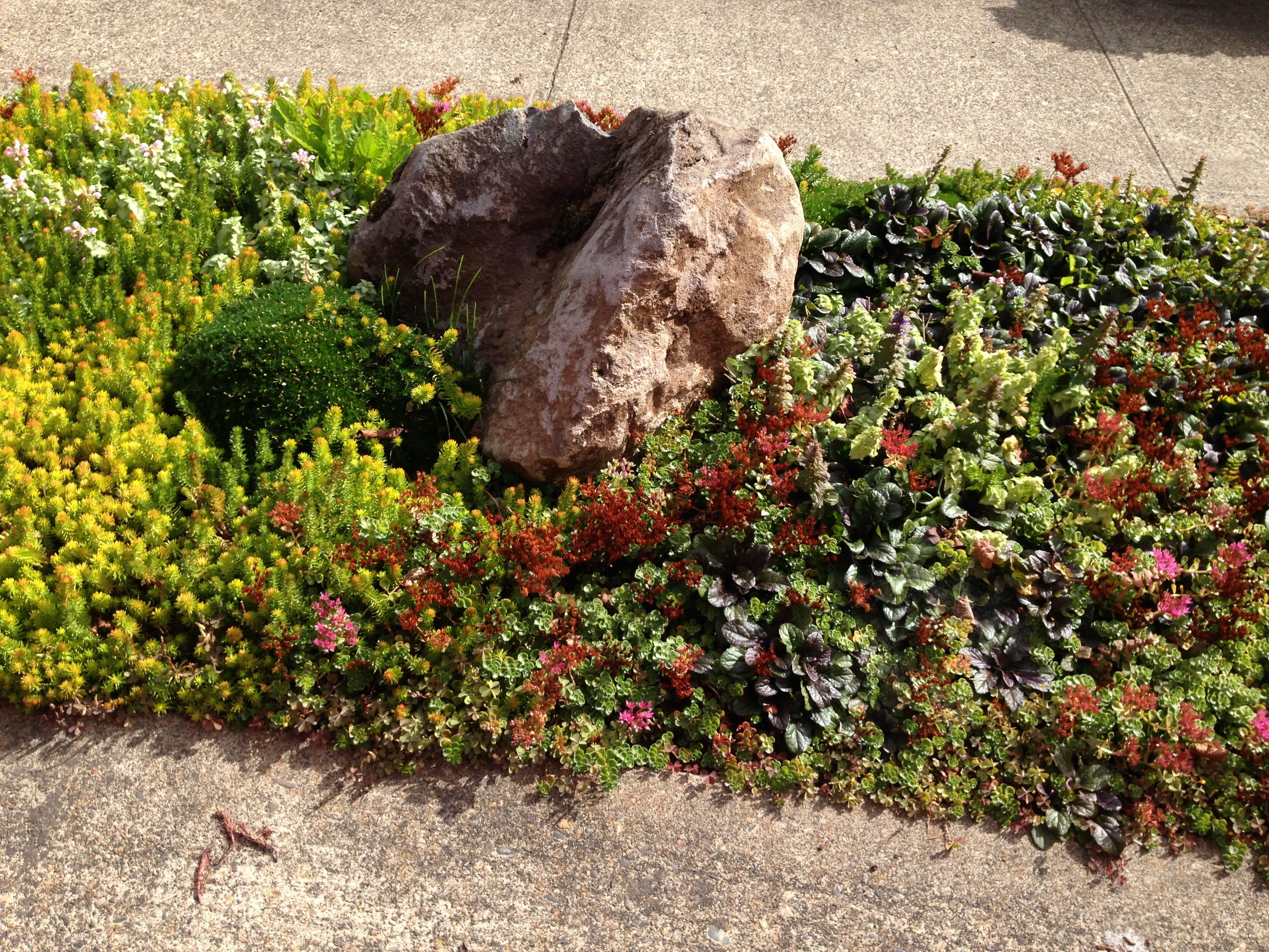 succulent sidewalk median border   Yard Design   Pinterest ...