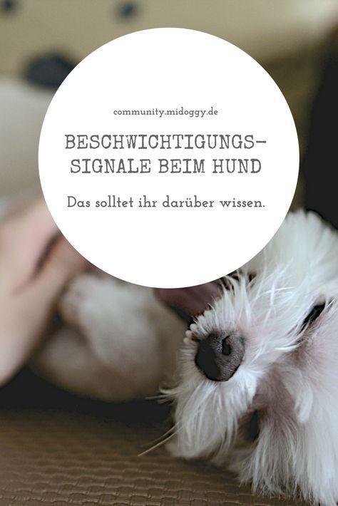 Beschwichtigungssignale Welpen Erziehen Hundeverhalten Und