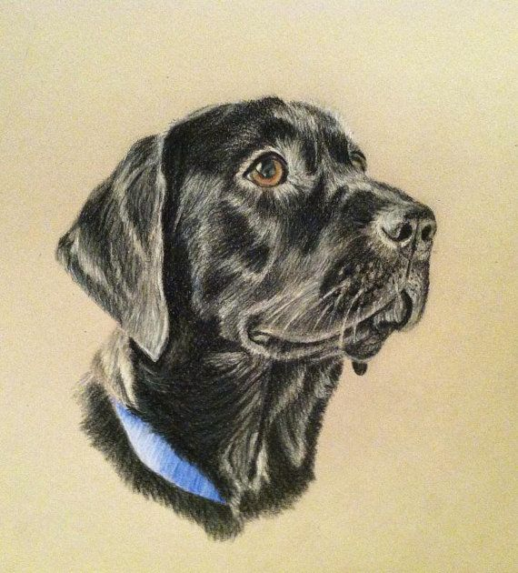 Portrait de chien au crayon de couleurPet par PatouPetPortraits