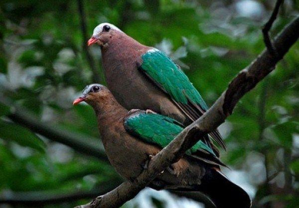 Pin on rare pigeons